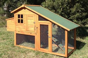 build a chicken coop review